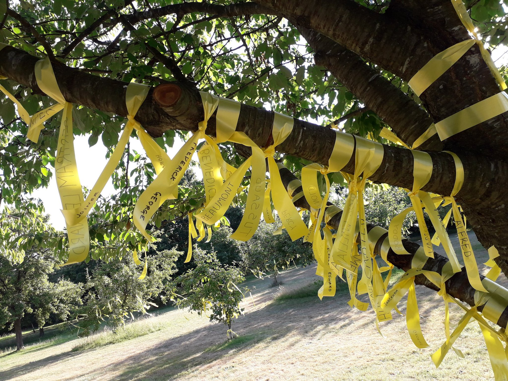 YellowRibbonTree1